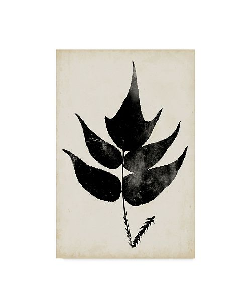 "Trademark Global Vision Studio Fern Silhouette IV Canvas Art - 37"" x 49"""