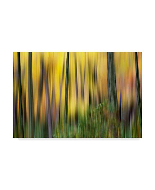 """Trademark Global James Mcloughlin Forest Run II Canvas Art - 20"""" x 25"""""""