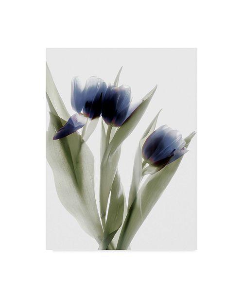 "Trademark Global Judy Stalus Xray Tulip IV Canvas Art - 15"" x 20"""