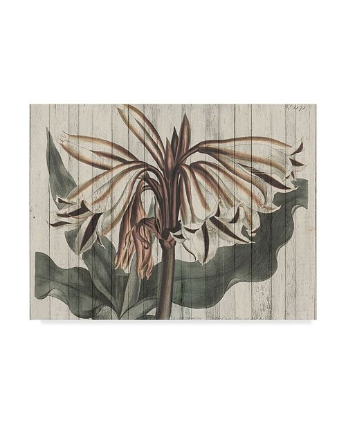"Trademark Global Studio W Rustic Floral III Canvas Art - 20"" x 25"""
