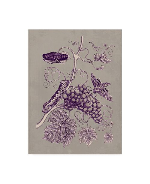 "Trademark Global Maria S. Merian Nature Study in Plum & Taupe III Canvas Art - 15"" x 20"""