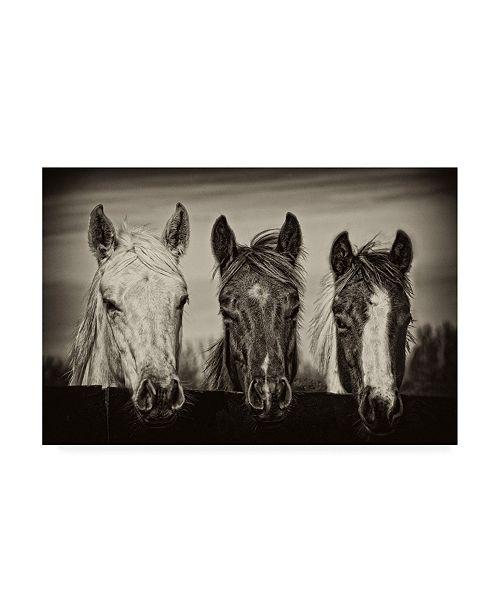 "Trademark Global PH Burchett Three Amigos I Canvas Art - 20"" x 25"""