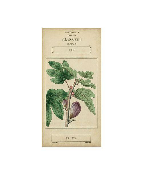 "Trademark Global Vision Studio Linnaean Botany VI Canvas Art - 15"" x 20"""