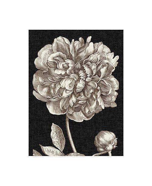"Trademark Global Vision Studio Dramatic Peony I Canvas Art - 37"" x 49"""