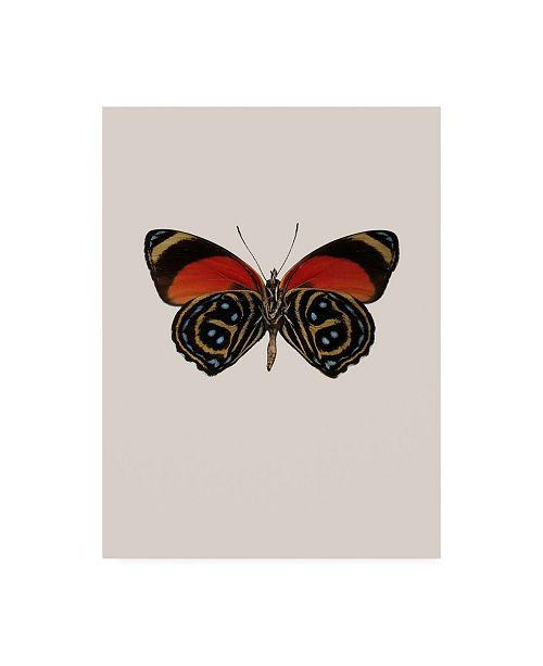 """Trademark Global Incado Agrias amydon Canvas Art - 36.5"""" x 48"""""""