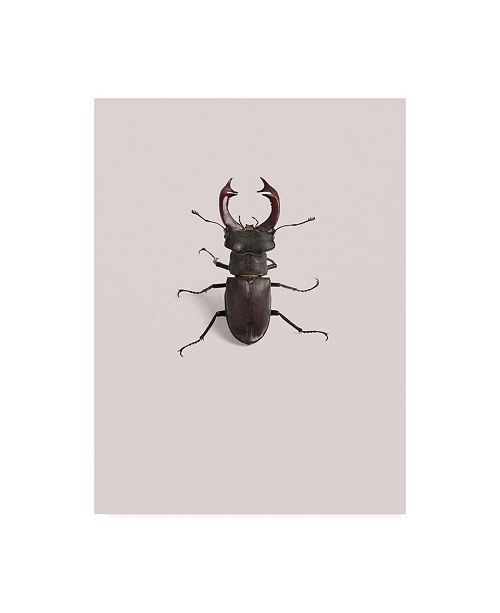 "Trademark Global Incado Lucanus cervus Canvas Art - 36.5"" x 48"""