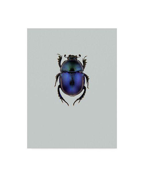 """Trademark Global Incado Trypocopris vernalis Canvas Art - 15.5"""" x 21"""""""