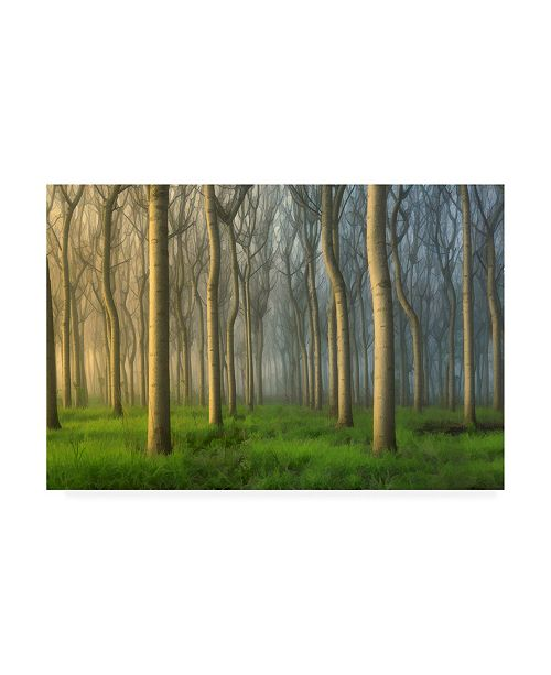 "Trademark Global Jingshu Zhu Paulownia Tree Canvas Art - 27"" x 33.5"""