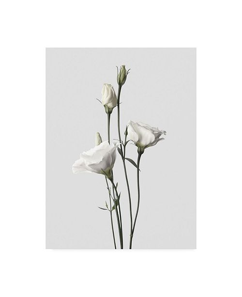 "Trademark Global Design Fabrikken Lisianthus White Fabrikken Canvas Art - 15.5"" x 21"""
