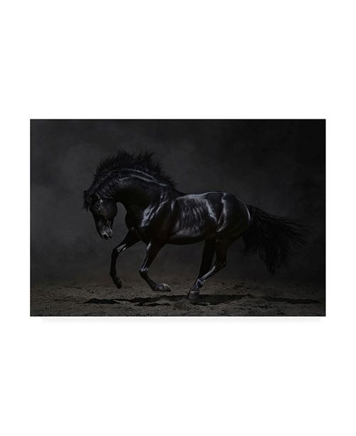 "Trademark Global PhotoINC Studio Onyx Horse Canvas Art - 19.5"" x 26"""
