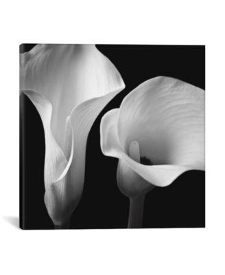 Softness Ii by Assaf Frank Wrapped Canvas Print - 18