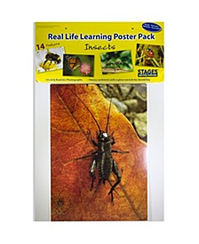 Real Photo Insects Poster Set