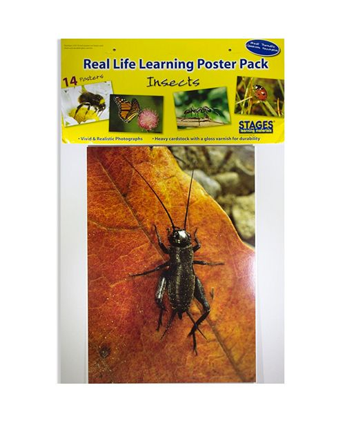 Stages Learning Materials Real Photo Insects Poster Set