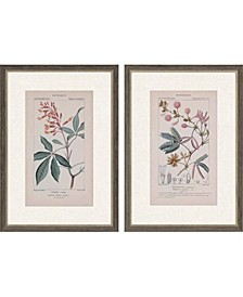 "Botanique in Pink II Framed Wall Art Set of 2, 35"" x 25"""