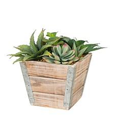 Succulent Plants in Wooden Box