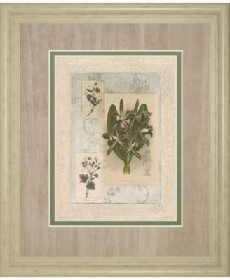 """Histoire Du Orchid VII by Carney Framed Print Wall Art, 34"""" x 40"""""""