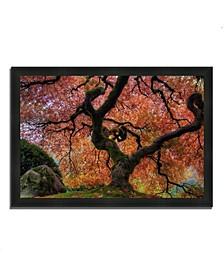 "Japanese Maple in Autumn Framed Photograph Print, 27"" x 39"""