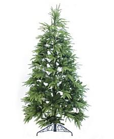 6' Northern Shasta Fir Full Christmas Tree