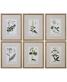 Green Floral Botanical Study Wall Art, Set of 6
