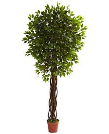 7.5' Ficus UV-Resistant Indoor/Outdoor Tree