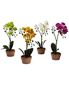 4-Pc. Phalaenopsis Orchid Set with Clay Vases