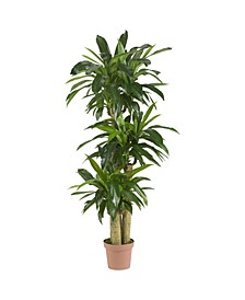 "57"" Corn Stalk Dracaena Real Touch Plant"