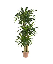 "Nearly Natural 57"" Corn Stalk Dracaena Real Touch Plant"