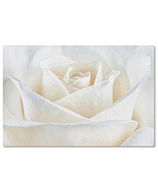 "Cora Niele 'Pure White Rose' 22"" x 32"" Canvas Art Print"