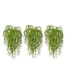 3-Pc. Senecio Succulent Artificial Plant Set