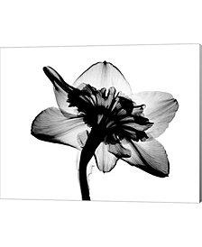 Daffodil #1 Xray By Bert Myers Canvas Art