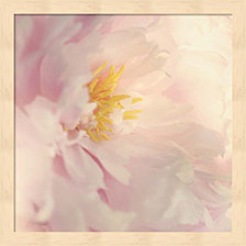 Bloom by Sarah Gardner Framed Art