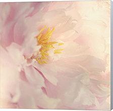 Bloom by Sarah Gardner Canvas Art