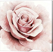 Pink Rose I By Grace Popp Canvas Art
