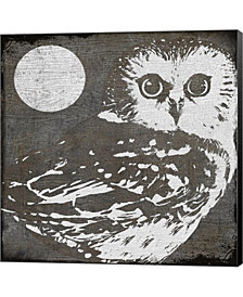 Owl 3 By Color Bakery Canvas Art