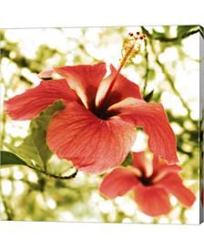 Hibiscus By Flowerphotos Canvas Art