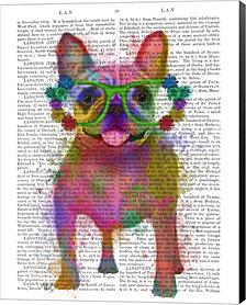Rainbow Splash French Bulldog, Full By Fab Funky Canvas Art