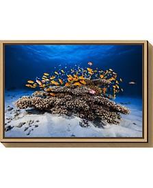 Amanti Art Marine Life by Barathieu Gabriel Canvas Framed Art