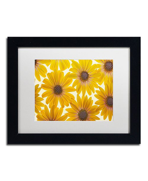 "Trademark Global Cora Niele 'Yellow Cape Daisies' Matted Framed Art, 11"" x 14"""