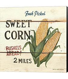 Fresh Picked Sweet Corn by David Carter Brown Canvas Art