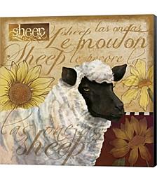 Sheep by Fiona Stokes-Gilbert Canvas Art