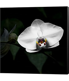 White Orchid With Bud by Harold Silverman Canvas Art