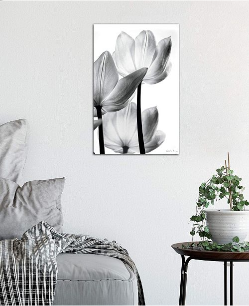 "iCanvas ""Translucent Tulips III"" by Debra Van Swearingen Gallery-Wrapped Canvas Print (40 x 26 x 0.75)"