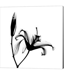 Lily + Bud X-Ray by Bert Myers Canvas Art