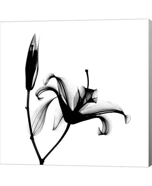 Metaverse Lily + Bud X-Ray by Bert Myers Canvas Art