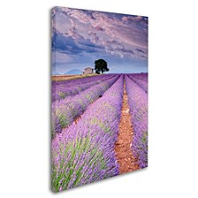 """Michael Blanchette Photography 'Rows Of Lavender' Canvas Art, 12"""" x 19"""""""