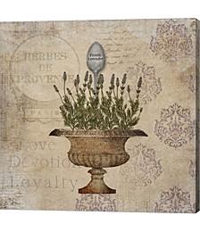 French Lavender by Beth Albert