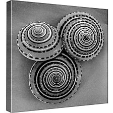 Ptm Images,B&W Seashell B Decorative Canvas Wall Art