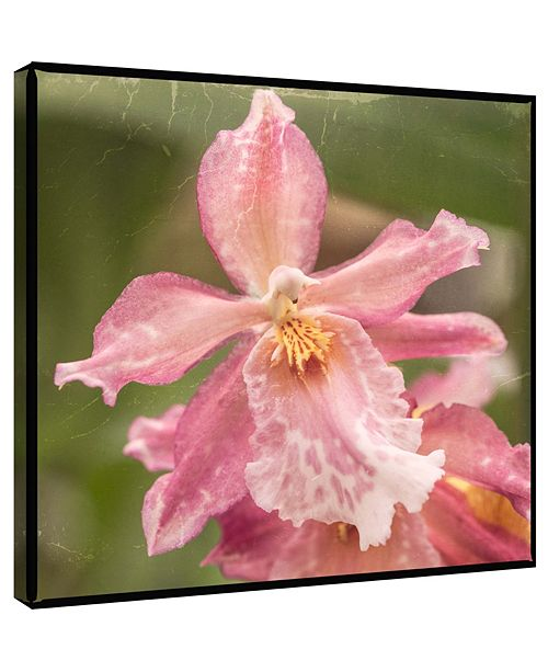 PTM Images Orchid Decorative Canvas Wall Art