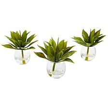 Mini Agave Succulent w/Vase, Set of 3