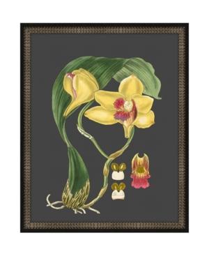 Beautiful Botanical on Black Ii Framed Giclee Wall Art - 17